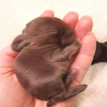 19 Super Tiny Bunnies That Will Melt The Frost Off Your Heart#bunnies