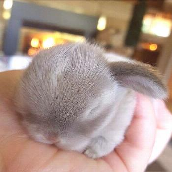 frostings Free idea frostings These little bunnies are guaranteed to make you squeal! So precious a