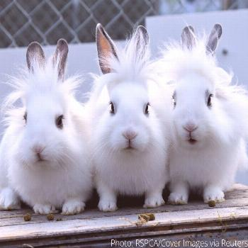 These three bunny brothers were made for modelling - just look at their windswept hair! What's cute