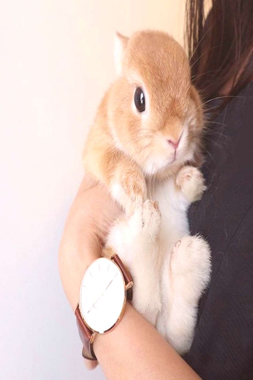 NEW16-Best-rabbit-funny2019-Page-6of7  How cute is this? . . . . .